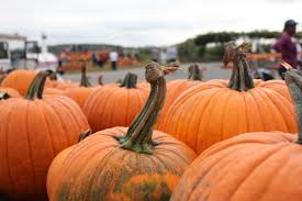 Motleys Pumpkin Patch by Corps De Ballet Moments U0026 Musings The Offbeat Chronicles Of A