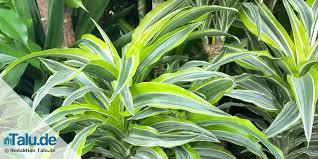 pflanzen im schlafzimmer 14 gesunde zimmerpflanzen talu de