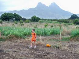 Waimanalo Pumpkin Patch Oahu by Waimanalo Country Farms