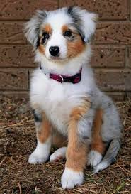 Cute Low Shedding Dogs by Best 25 Dog Breeds Ideas On Pinterest Origin Of Dogs Dogs And