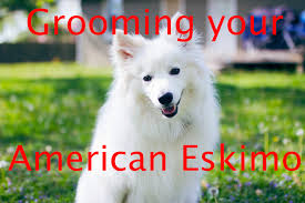 grooming an american eskimo furminator demo youtube
