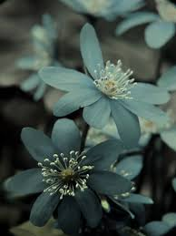 Blue Flowers These baby blue flowers are just so pretty and the