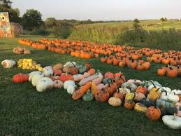 Faulkner County Pumpkin Patch by 11 Best Pumpkin Patches In Kansas City In 2017 Only In Your State