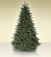 75 Ft Treetime Balsam Glen Artificial Christmas Tree With Clear Lights More Info