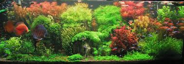 Aquascape Series | [T A G] An Inrmediate Guide To Aquascaping Aquaec Tropical Fish Most Beautiful Aquascapes Undwater Landscapes Youtube 30 Most Amazing Aquascapes And Planted Fish Tank Ever 1 The Beautiful Luxury Aquaria Creating With Earth Water Photo Planted Axolotl Aquascape Tank Caudataorg 20 Of Places On Planet This Is Why You Can Forum Favourites By Very Nice Triangular Appartment Nano Cube Aquascape Nature Aquarium Aquascaping Enrico A Collection Of Kristelvdakker Pearltrees