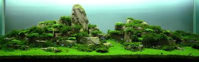 A Beginner's Guide To Aquascaping – Aquaec Tropical Fish An Inrmediate Guide To Aquascaping Aquaec Tropical Fish Most Beautiful Aquascapes Undwater Landscapes Youtube 30 Most Amazing Aquascapes And Planted Fish Tank Ever 1 The Beautiful Luxury Aquaria Creating With Earth Water Photo Planted Axolotl Aquascape Tank Caudataorg 20 Of Places On Planet This Is Why You Can Forum Favourites By Very Nice Triangular Appartment Nano Cube Aquascape Nature Aquarium Aquascaping Enrico A Collection Of Kristelvdakker Pearltrees