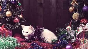 Aspirin Keep Christmas Trees Alive by A Cat Proof Christmas Tree It Is Possible Petcarerx