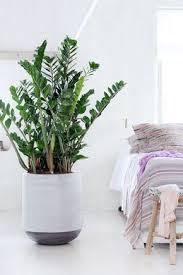 die richtige zimmerpflanze für das schlafzimmer