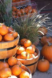 Hillcrest Farms Pumpkin Patch by 165 Best Pumpkin Patch Images On Pinterest Colors Candies And Earth