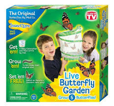 Insect Lore Live Butterfly Garden Amazon Toys & Games