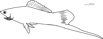 Freshwater Fish Coloring Pages Pictures