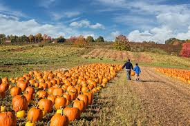 Pumpkin Picking Corn Maze Long Island Ny by Where To Go Pumpkin Picking Near Nyc With Kids