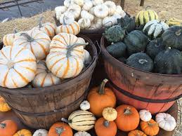 Pumpkin Patch Near Bay Area by The Best South Bay Pumpkin Patches For Kids And Adults