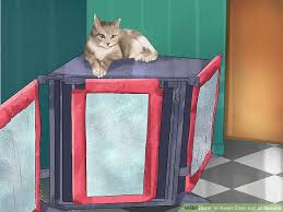 How to Keep Cats out of Rooms 12 Steps with wikiHow
