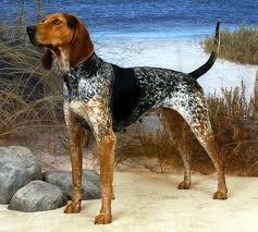 Best House Dogs That Dont Shed by U0027s Dog Blog 25 Tricolor Dog Breeds