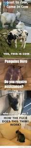 Cozzia Massage Chair 16027 by 18 Best Massage Quotes U0026 Jokes Images On Pinterest Massage