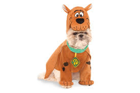 Halloween Knock Knock Jokes For Adults by Dog Halloween Costumes Best Halloween Costumes For Dogs