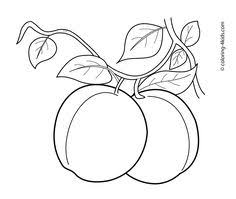 Apricots Fruits Coloring Pages For Kids Printable Free