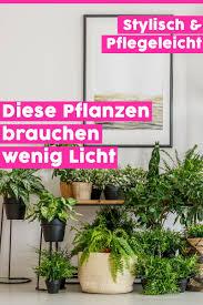 6 zimmerpflanzen die wenig licht brauchen pflanzen