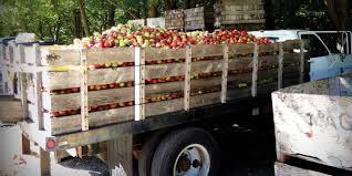 The Five Senses Of Clyde's Cider Mill - Coastal Connecticut Magazine Coastal Truck Driving School Calhoun La Cdl Traing Programs Bundaberg Drive Bgara Beach Emma N Hurt Trucking Carrier Warnings Real Women In Atlantic Hyundai Elantra Sign Design Llc Pretrip Inspection Youtube Your New Truck Driver Job Is Here Heartland Express Schools Umm Al Quwain With Contact Details Reviews Crash Victims Family Sues Truck Driver Company Usa Hauling Driver Participates And Wins The Annual Why We Need Drivers Transportfolio Lcia Hosting New Orleans Area Lunch For Transportation Industry 3