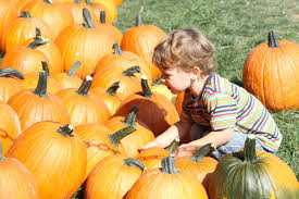 Chesterfield Berry Farm Pumpkin Patch 2015 by Pumpkin Picking In Nj 2015 County Guide