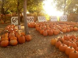 Pumpkin Farms In South Georgia by 10 Best Pumpkin Patches To Visit In Idaho