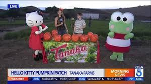 Tanaka Farms Pumpkin Patch by Hello Kitty Pumpkin Patch At Tanaka Farms Ktla