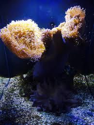 aquarium geant a visiter belgique notre séjour à la côte d opale belgian