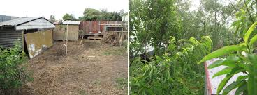 A Permaculture Food Forest In Three Years Thriving Backyard Food Forest 5th Year Suburban Permaculture Bill Mollison Father Of Gaenerd 101 Pri Cold Climate Archives Chickweed Patch Garden Design With Permaculture Kitchen Herb Spiral Backyard Orchard For The Yards Pinterest Orchards Australian House Garden January 2017 Archology Download Design And Ideas Gurdjieffouspenskycom Sustainable Farm Future Best 25 Ideas On Vegetable Youtube