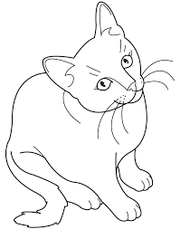 Cute Realistic Cat Coloring Pages