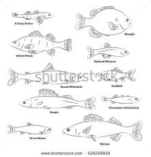 Fish Sorts And Types Hand Drawn Vector Illustration Of Freshwater