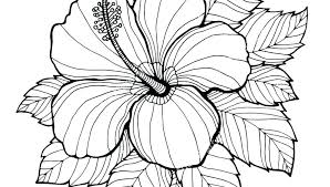 Hibiscus Coloring Pages Adults Flower Page For Kids Flowers Sheets Clip Art Of Bouquet Pictures To