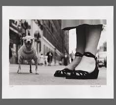 100 Where Is Chihuahua Located 1 New York City 1946