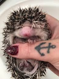 quill berry hedgehogs home facebook