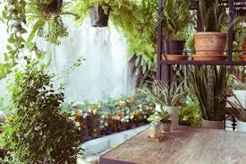 dekoration wohnzimmer innenraum stil grüne öko umwelt mit pflanzen nad baum