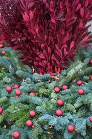 Christmas Tree Permit Colorado Springs 2014 by Holiday Decor Dirt Simple