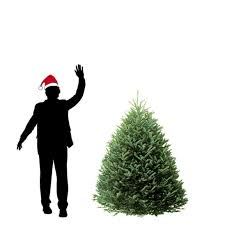 Fraser Fir Christmas Trees Delivered by Choose Your Variety Of 5 Ft Christmas Tree Hilltop Christmas