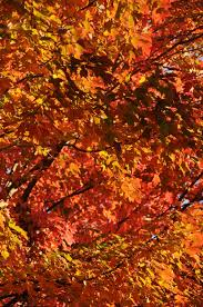 Naked Came The Leaf Peeper Is A Serial Collaborative Novel Representing Collective Wit And Genius Of Twelve Western North Carolina Authors