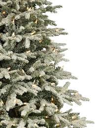 Fraser Fir Christmas Trees Delivered by Frosted Fraser Fir Narrow Artificial Christmas Tree Balsam Hill