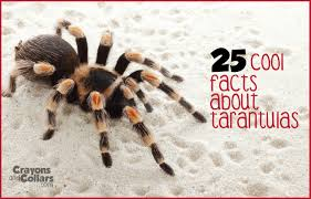 Do Tarantulas Shed Their Fangs by Crayons And Collars U2013 Life With Kids And Pets 25 Cool Facts About