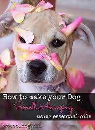 My Dog Stinks And Sheds A Lot by A Typical English Home How To Stop Your House Smelling Like Dog