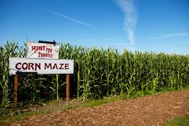 Swan Farms Snohomish Pumpkin Patch by Turn Corn Mazes Into A Family Fitness Adventure