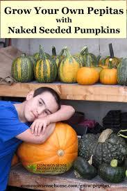 Varieties Of Pumpkins by Grow Hulless Pumpkin Seeds 1 Jpg