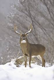 Snow King. #Whitetail #Buck #Deer | Mud, Trucks, And Big Tail Bucks ... Its Time To Reconsider Buying A Pickup Truck The Drive Ducks Trucks And Big Ole Bucks Infant Boy Gift Set Onesie Soft Plush Maline Chrysler On Twitter Save Ram Stop By Trbuck Contest 201718 Scoring Results Chuk3281 Mar 240k Website Images 15x1000 Mech Must Have Pdf For Cash How To A Semitruck And Earn Best Deer Decal Ever Bowhuntingcom Fairwarning Article Safety Coalition Black Isobar Buckwoodsdesignco Buck Camo Biggest Truck This Giant Is The Most Awesome Thing Youll See Today Some Of Bigger Bucks Taken My Camp This Year Hunting