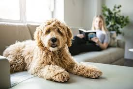 darf der hund aufs sofa hunde kausnacks magazin