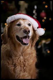 Neuman Christmas Tree Bags by 168 Best Christmas Photo Pet Cards Images On Pinterest Animals