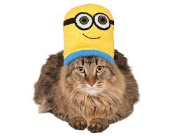costume for cat costumes for cats