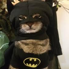 cat batman costume batman costumes for cats costume model ideas