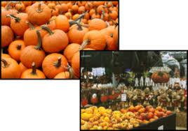 Local Pumpkin Farms In Nj by Pumpkin Patch In Manalapan Nj Maple Leaf Farms Nj