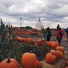 Free Pumpkin Patch Wichita Ks by 12 Of America U0027s Best Pumpkin Patches To Visit This Fall Cocoro